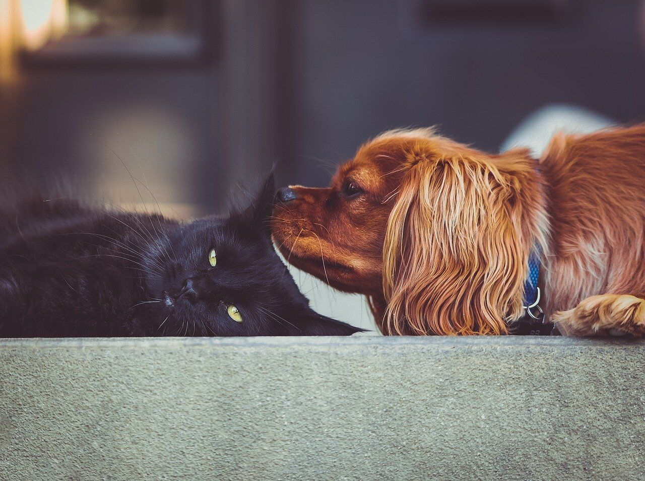Pet-Proofing Your Apartment