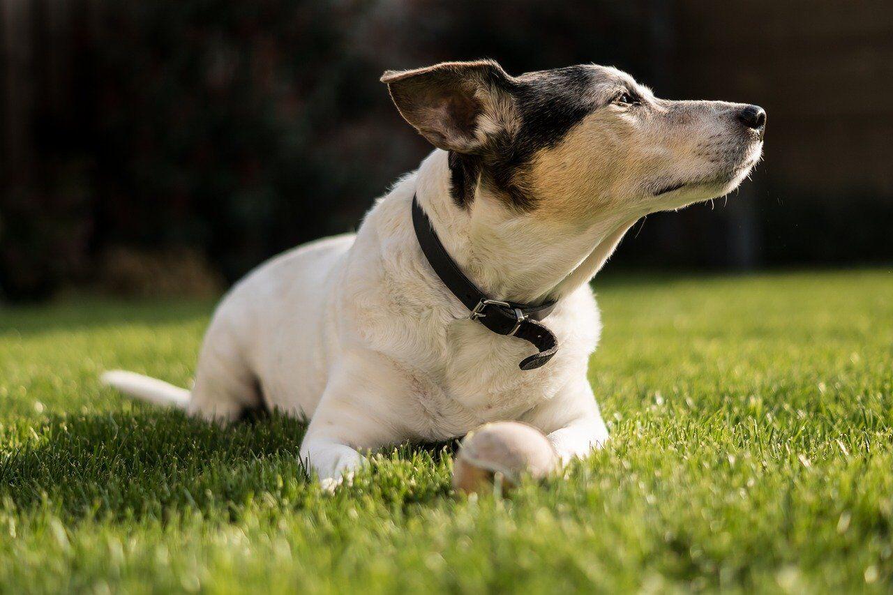 Top 5 Dog Friendly Spots in Farmington Hills