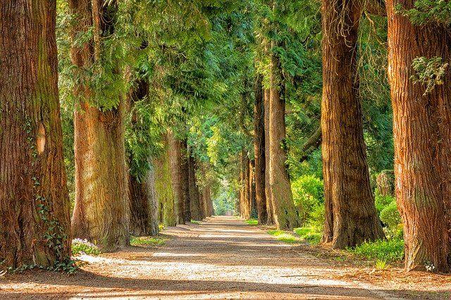 Big Trees Park